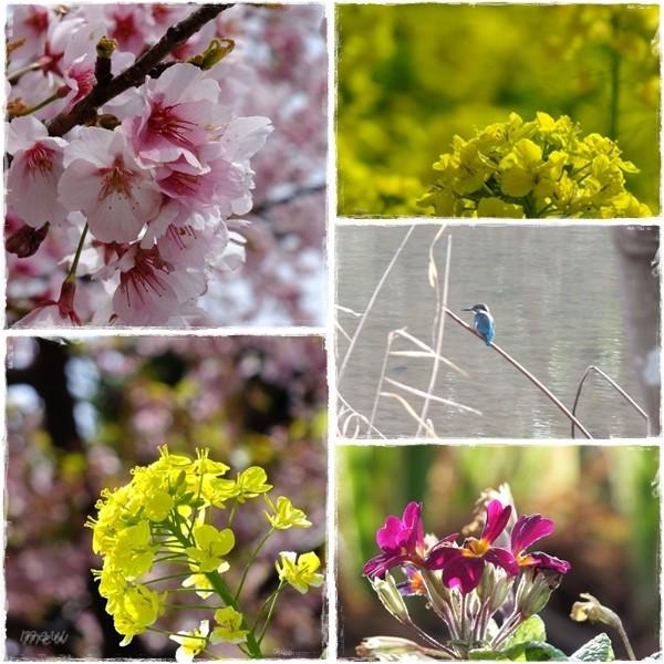 写真: 春の目覚め:*☆*:;;;;;:*☆