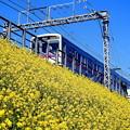 写真: 菜の花電車