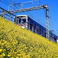 Photos: 菜の花電車