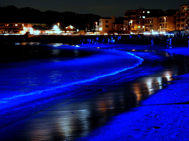 写真: NIGHT WAVE