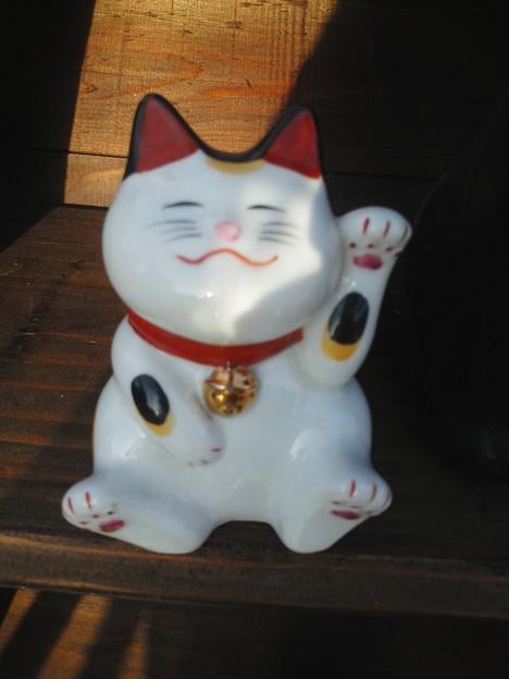 Photos: かわゆい猫