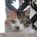写真: 散歩の楽しみは、基本、猫と…