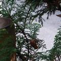 Photos: 蝉の抜け殻が庭先にずーーとある。多分昨年の夏から。その間に台風や野鳥も来てるんだけんどね
