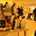 Photos: ペンギン(ソラマチのショップにて)