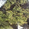 写真: 書写山円教寺(兵庫県姫路市)(8)
