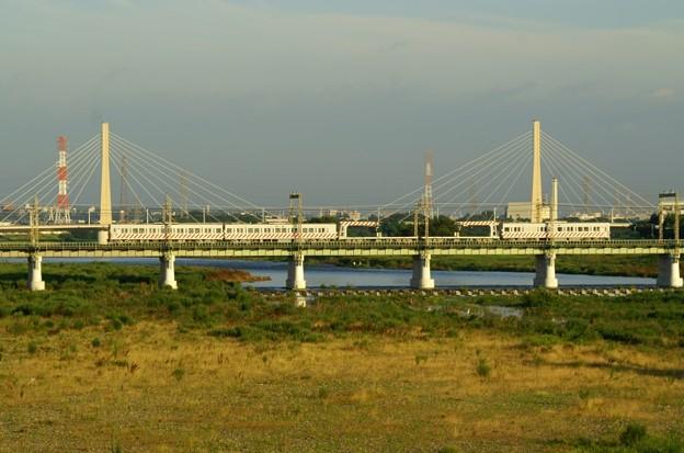 朝日を浴び多摩川を渡るデワ+チキ