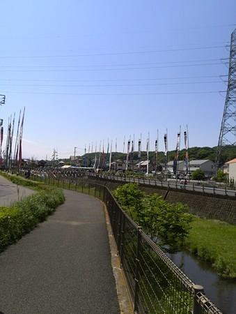 鶴見川 鯉のぼり