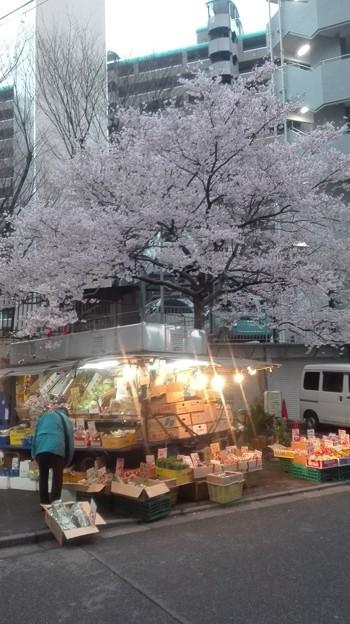 移動八百屋と桜