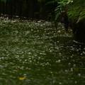Photos: 豪雨に弾かれ