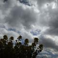 Photos: 曇り時々晴れ ところにより菜の花