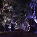 写真: 幻想の並木道