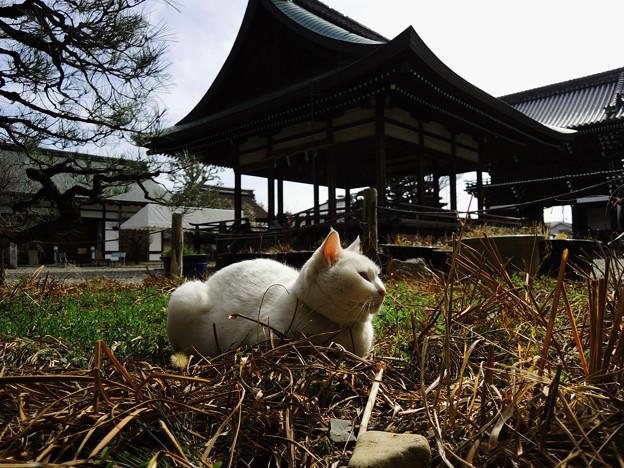 Photos: 考える猫