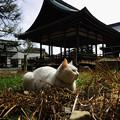 写真: 考える猫