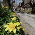 写真: 花咲く小径