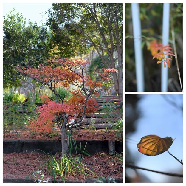 花の文化園(20161203)_xf35mm1