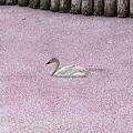 Photos: セレブ白鳥