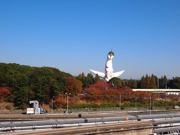 写真: 万博記念公園