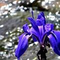 水辺で見かけた花