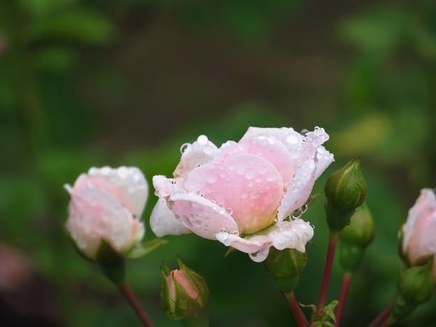 Rain&Rosa 4