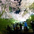 桜の渦中へ