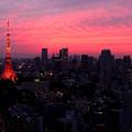 WTCにて、夕方。