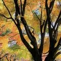 写真: 紅葉 吉野公園