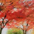 写真: 紅葉 健康の森公園