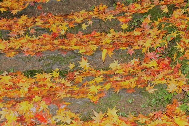 紅葉 落葉
