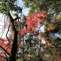写真: 慈眼寺公園 もみじ谷