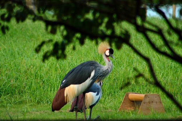 袖ヶ浦公園に迷い込んだ変な鳥 (1)