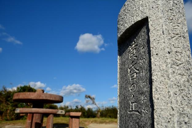 Photos: 黄昏の丘