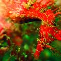 海藻に擬態中~^^