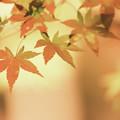 秋色 op.3
