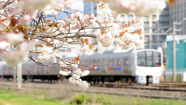 八重の列車