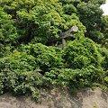 Photos: トマソン系鳥居
