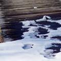 写真: 雪に遊ぶ