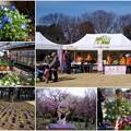梅祭り 3月4日