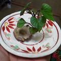 Photos: ♪【誕生】さつま芋のハシッコからでてきた 水に浸けておいただけ (^O^)