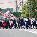 かつみ(鳴子会)_07 - 第8回 浦和よさこい2011