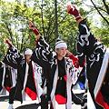 かつみ(鳴子会)_06 -  「彩夏祭」 関八州よさこいフェスタ 2011