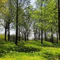 写真: ブルーメの丘