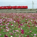 Photos: 秋の名鉄電車