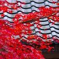 写真: 日本人