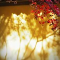 写真: 秋深し