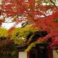写真: 本土寺 (4)