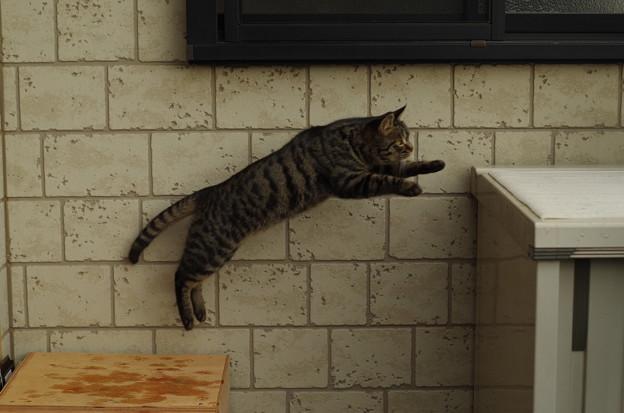 写真: 飛び猫 (1)