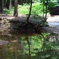 写真: 芦生の森