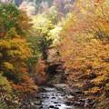 Photos: 秋の溪谷