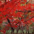 Photos: 秋を尋ねて