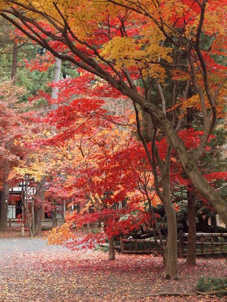 Photos: 平林寺の中庭